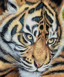 Tiger Cub II by Pip McGarry -  sized 10x12 inches. Available from Whitewall Galleries